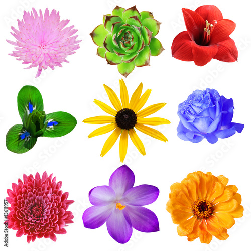 Fotobehang Pansies Flower Set
