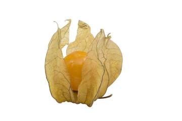 Cape Gooseberry / Physalis