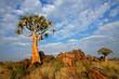 Leinwandbild Motiv Landscape with quiver tree (Aloe dichotoma), Namibia