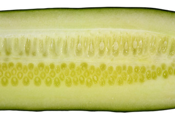 cucumber closeup