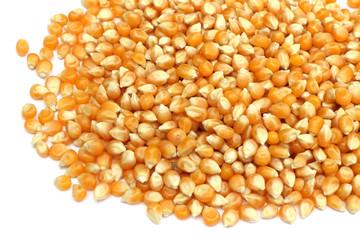 grains de maïs à pop-corn