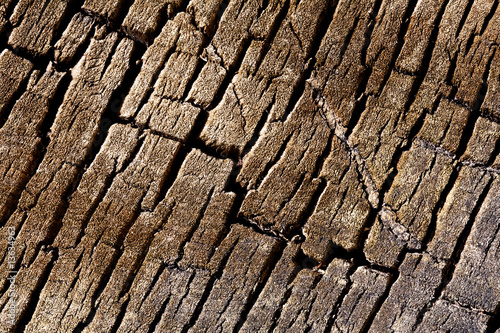 Texture background - tree cracked bark