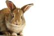 Funny Looking Bunny