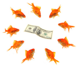 goldfish group around dollar