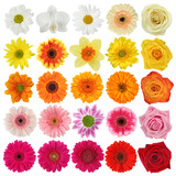 Fototapety Flower collection isolated on white background