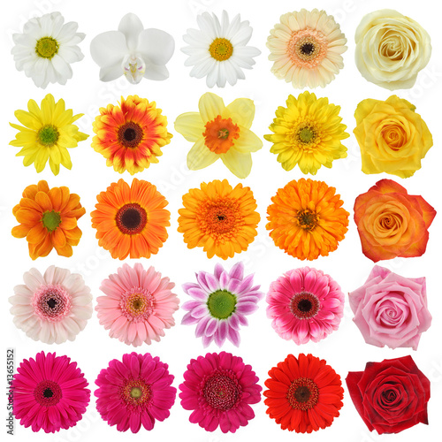 Foto op Canvas Madeliefjes Flower collection isolated on white background