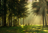 Fototapety Morning in a spring forest