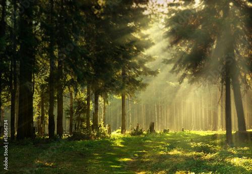 Leinwandbild Motiv Morning in a spring forest