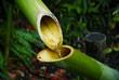 fontaine de bambou - 13662311