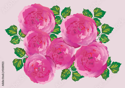 six pink rose decoration