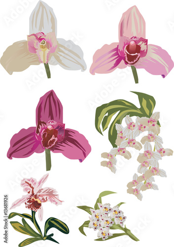 light orchid collection