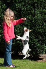 Springender Jack Russell Terrier