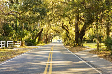 Rural Road Through Spanish Moss