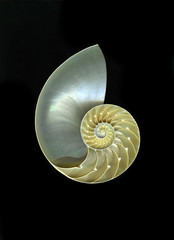Chambered Nautilus against a dramatic background