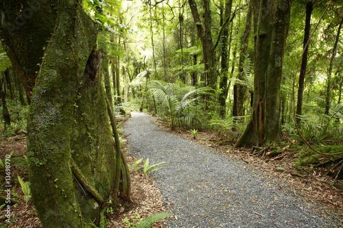 Tropical forest path © Stillfx