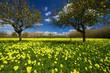 Sicilian spring