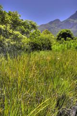African wildernes