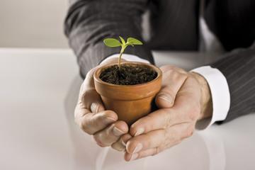 Hände halten Blumentopf mit kleiner Pflanze