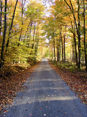 dirt road through autumn forest