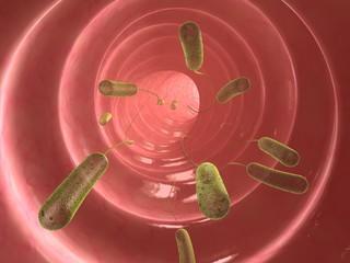 darm mit e-coli bacteria