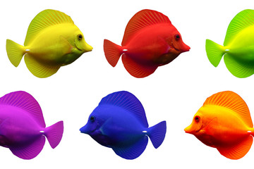 Doktorfische bunte Reihe