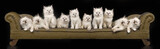 Composite panorama of 10 Ragdoll kittens on sofa