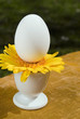 Egg and flower in egg cups