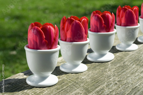 Tulips in egg cups