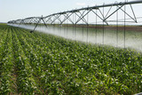 Corn field and low water requirement irrigation system poster
