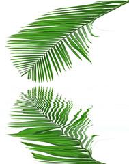 des reflets de palme verte sur un fond blanc