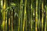 Fototapety bambous