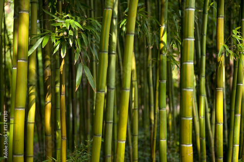 Staande foto Bamboo bambous