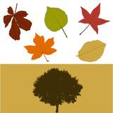 Fototapety Herbst_Baum_Blaetter