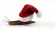 Lumaca natalizia