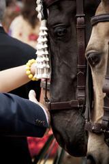 acariciando a los caballos