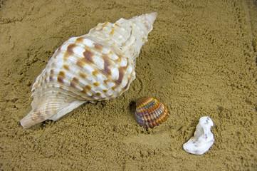 caracola y conchas