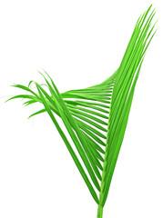 palme verte