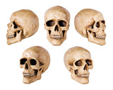 synthetical skull many angle view on white with clipping path poster