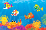 Crab and Coral fishes