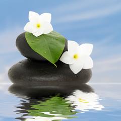Frangipanier blanc esprit zen