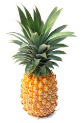 """ananas """"Victoria"""" de l'île de la Réunion"""