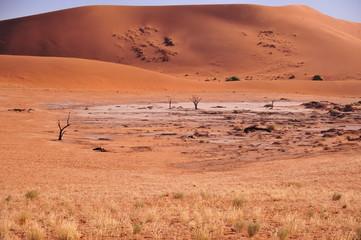 Arbres pétrifiés dans le désert du namib