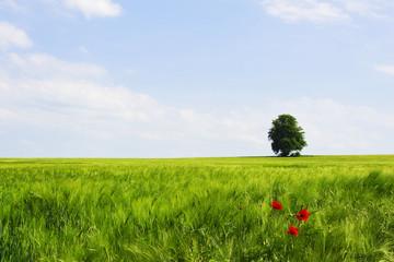 Die Weite des Frühlings