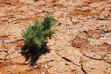 Little plant in a dry environment