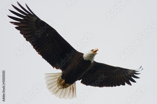 Foto op Canvas Eagle Eagle