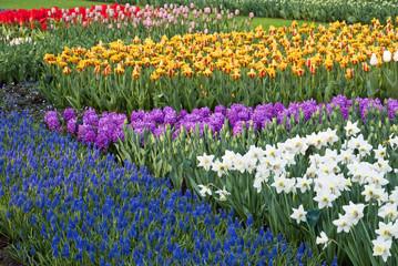 Keukenhof Spring Tulip Garden