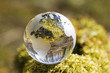 Crystal globe in forest