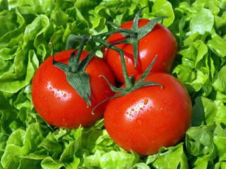 tomates et salade