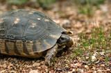 Small turtle reptile in natural habitat. poster