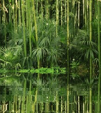 Bamboo waterfront